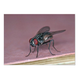 Closer view of house fly insect personalized invites