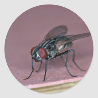Closer view of house fly insect classic round sticker