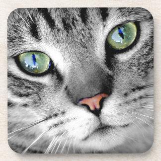 Closeup Cat Beverage Coaster
