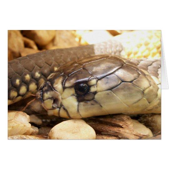 Closeup Cobra Head Card