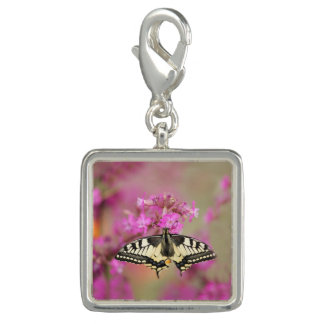 Closeup dovetail butterfly on lilac flower charm