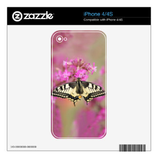 Closeup dovetail butterfly on lilac flower decals for the iPhone 4