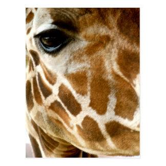 Closeup Giraffe Face Wild Animals Nature Photo Postcard