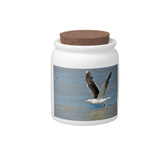 Closeup Great Black-backed Gull in flight Candy Dish