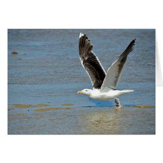 Closeup Great Black-backed Gull in flight Card
