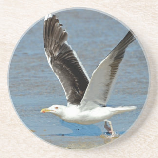 Closeup Great Black-backed Gull in flight Beverage Coasters