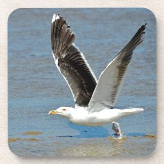 Closeup Great Black-backed Gull in flight Coaster