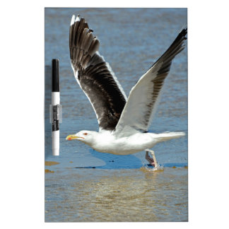 Closeup Great Black-backed Gull in flight Dry Erase Whiteboards
