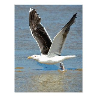 Closeup Great Black-backed Gull in flight Custom Letterhead