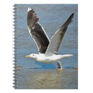 Closeup Great Black-backed Gull in flight Note Books