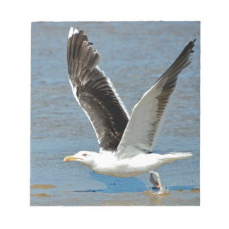 Closeup Great Black-backed Gull in flight Notepads