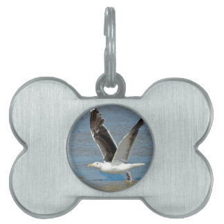 Closeup Great Black-backed Gull in flight Pet Name Tag