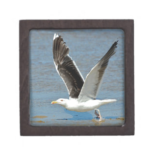 Closeup Great Black-backed Gull in flight Premium Keepsake Boxes