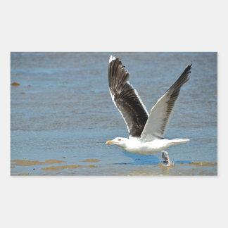 Closeup Great Black-backed Gull in flight Rectangular Sticker