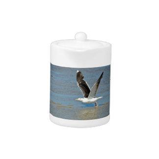 Closeup Great Black-backed Gull in flight