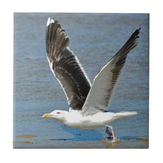 Closeup Great Black-backed Gull in flight Ceramic Tiles