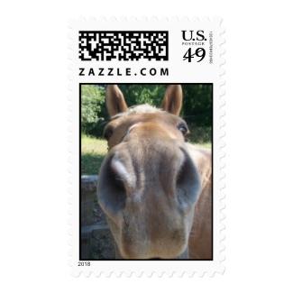 Closeup Horse Postage Stamp