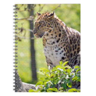 Closeup leopard in the vegetation notebook