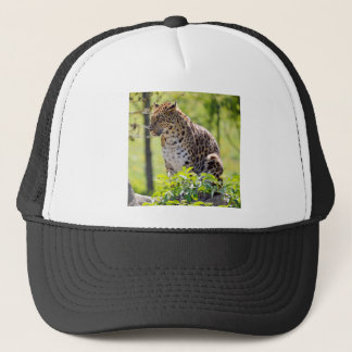 Closeup leopard in the vegetation trucker hat