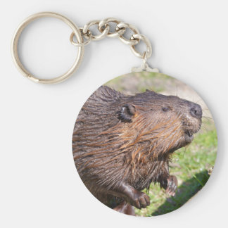 Closeup North American Beaver (Castor canadensis) Keychain