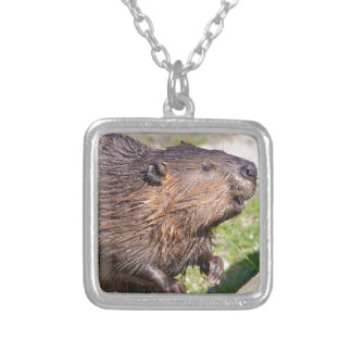 Closeup North American Beaver (Castor canadensis) Silver Plated Necklace