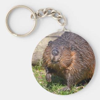 Closeup North American Beaver Keychain