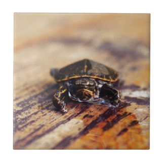 Closeup of a Baby Painted Turtle Tile