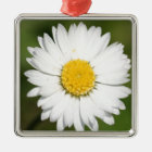 Closeup Of A Beautiful Yellow And Wild White Daisy Metal Ornament