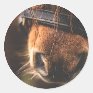 Closeup of a Cute Brown Horse Nose Classic Round Sticker