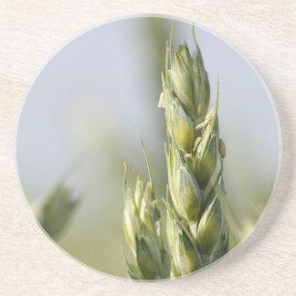 Closeup of a green corn drink coaster