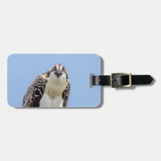 Closeup of a Juvenile Osprey Tag For Luggage