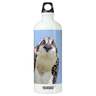 Closeup of a Juvenile Osprey Water Bottle