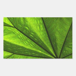 closeup of a leaf rectangular sticker