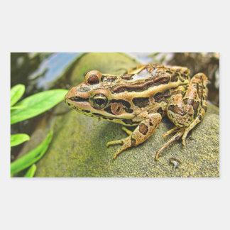 Closeup of a Pickerel Frog Rectangular Sticker