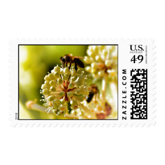 Closeup of bee pollination stamps