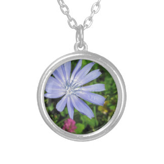 Closeup of blue Chicory flower on a background of Silver Plated Necklace