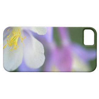 Closeup of Colorado Columbine flower. iPhone SE/5/5s Case
