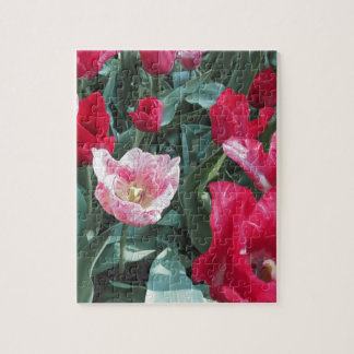 Closeup of colorful tulips with droplets in spring jigsaw puzzle