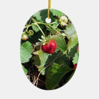 Closeup of fresh organic strawberries ceramic ornament