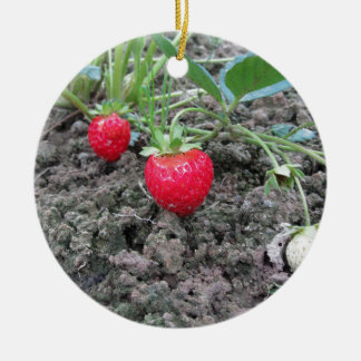 Closeup of fresh organic strawberries in the garde ceramic ornament