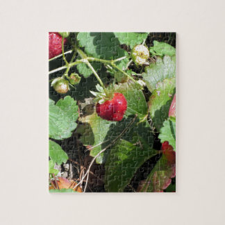 Closeup of fresh organic strawberries jigsaw puzzle
