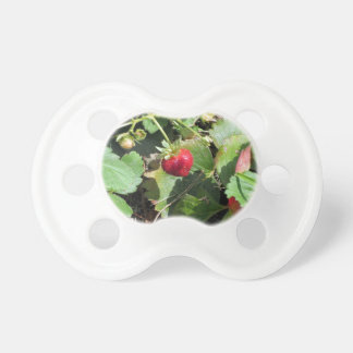 Closeup of fresh organic strawberries pacifier