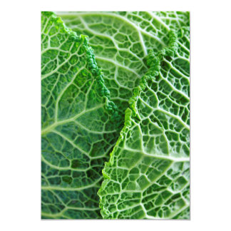 Closeup of green cabbage leaves card