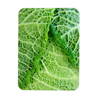Closeup of green cabbage leaves magnet