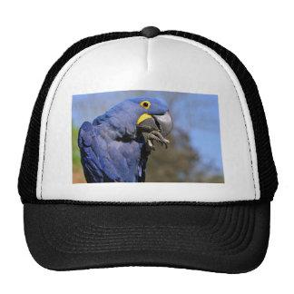 Closeup of Hyacinth macaw Trucker Hat