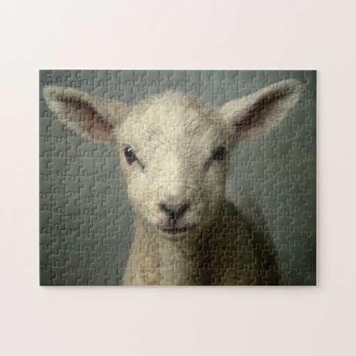 Closeup of new born lamb with grey background. jigsaw puzzle