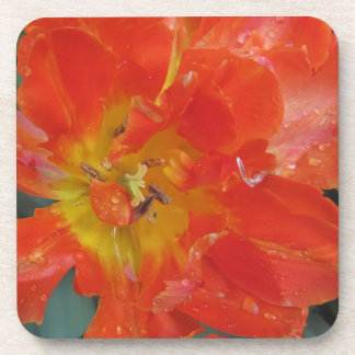 Closeup of orange tulip with droplets in spring beverage coaster