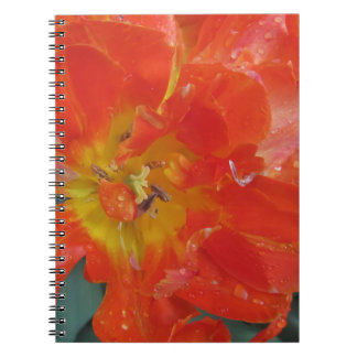 Closeup of orange tulip with droplets in spring notebook