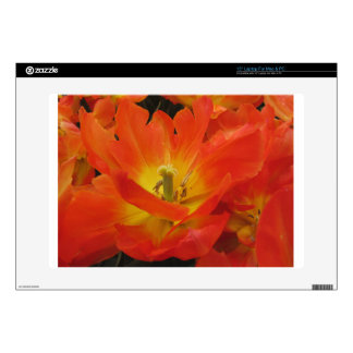 "Closeup of orange tulips in spring decal for 15"" laptop"