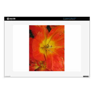 "Closeup of orange tulips in spring decals for 15"" laptops"